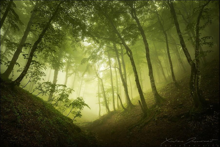 幽暗且神秘 精彩森林风光摄影作品赏析