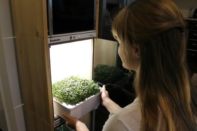 自家的菜园子 在家里种植蔬菜靠谱么?