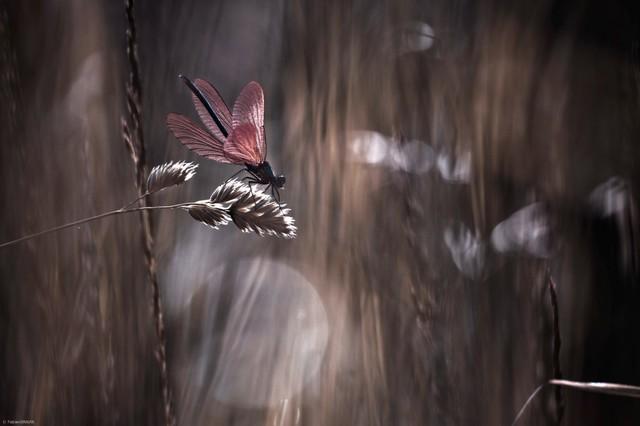 如梦似幻 唯美的昆虫摄影作品欣赏